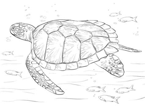 coloriage tortue verte coloriages 224 imprimer gratuits