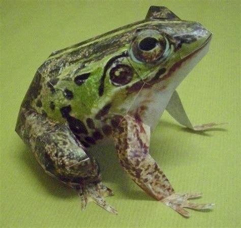 Papercraft Frog - another papercraft frog by master kankuro on deviantart