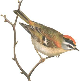 cuisiner le c駘eri en branche image oiseau sur une banche pour la creation