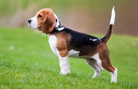 breeds for families top 10 breeds for and families best dogs for children