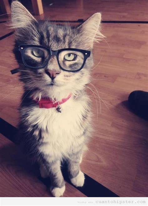 Imagenes Hipster Gatos | gatos hipster taringa
