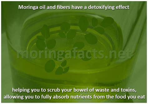 Moringa Side Effects Of Detox by Moringa And Fibers A Detoxifying Effect Moringa