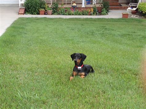 best underground fence waxhaw fence doberman lover contain a pet of
