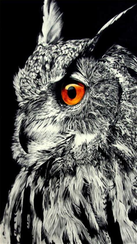 wallpaper iphone owl beautiful owl animal iphone wallpapers iphone 5 s 4 s