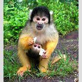 cute-squirrel-monkeys