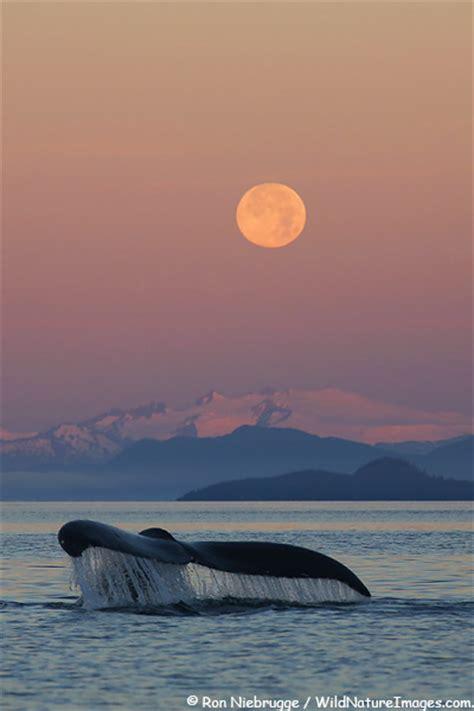 best latin boat names humpback whale photo blog niebrugge images