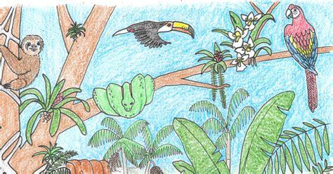rainforest colors tropical rainforest coloring page larsonporscheaudiblog