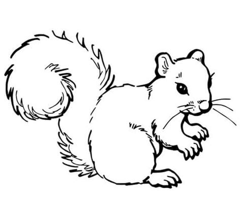 grijze eekhoorn kleurplaat gratis kleurplaten printen