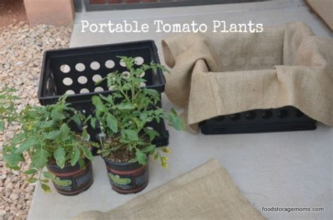 Portable Tomato Planter by Everything You Need To To Start Your Garden Food