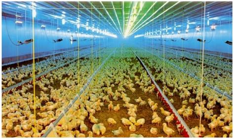 poultry house lighting systems products agriculture lighting eltam ein hashofet
