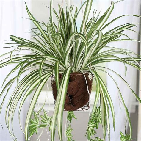 spider plant artificial spider plant bush new items