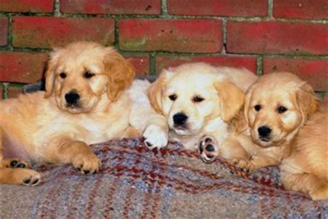 are dogs mammals reproduction