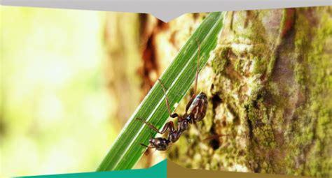 come liberarsi dalle formiche in cucina come liberarsi dalle formicheiside disinfestazioni