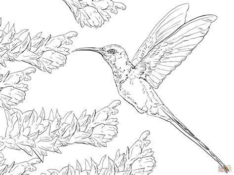 coloring pages for adults hummingbird adult coloring hummingbird coloring pages
