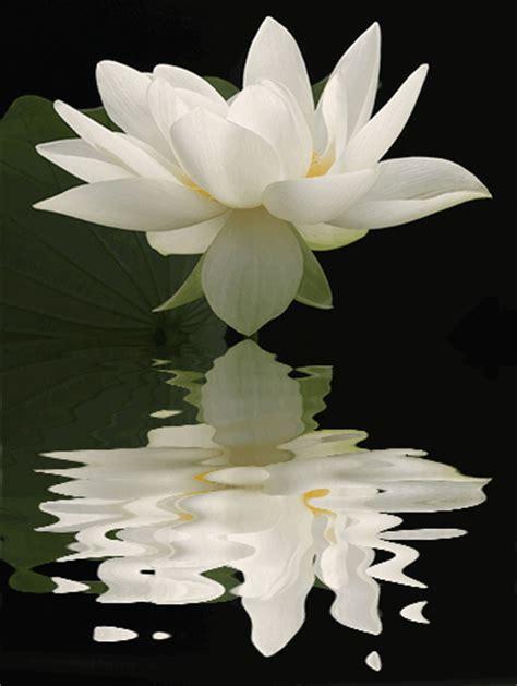 white lotus day