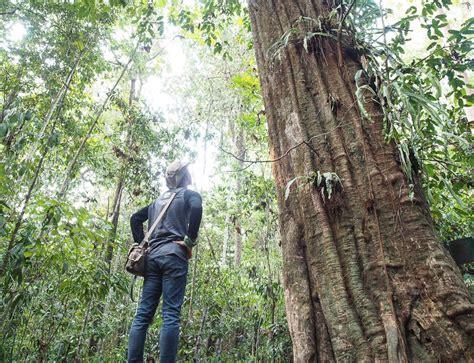 Pot Anggrek Kayu Ulin mengenal jenis jenis tanaman langka indonesia yang