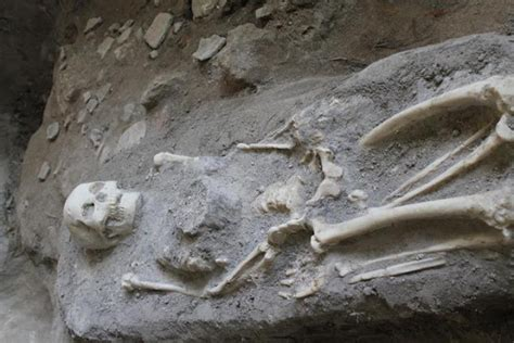 Fosil Kerang Purba temuan fosil manusia purba di takengon jejak alam bebas