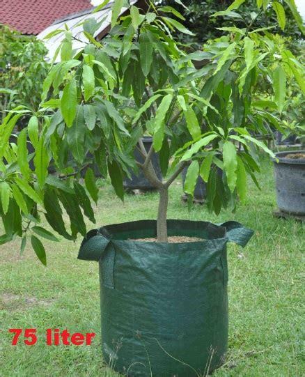 Harga Planter Bag 2016 planter bag hijau 75 liter bibitbunga