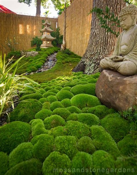 image result for sphagnum moss alive eclectic gardening