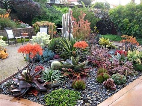 giardino di piante grasse le 25 migliori idee su giardino di piante grasse su