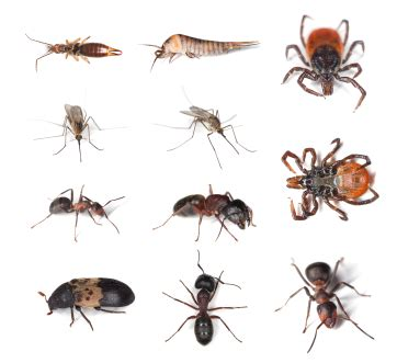 house pest control image gallery house insects in florida