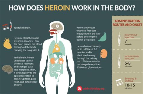 How Does It Take Yo Detox Herion by Heroin Metabolism In The How Heroin Affects The