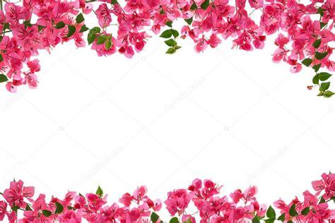 rose pennock floral page 2 cadre fleur bougainvillier sur fond blanc provincial