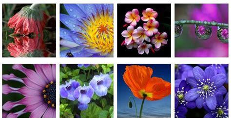 imagenes flores maravillas las mas bellas flores del mundo fotos taringa