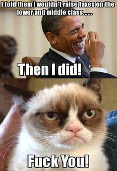 Fuck You Cat Meme - 1000 images about political fun on pinterest presidents