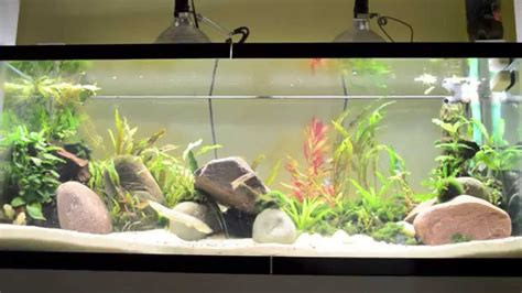 best light for planted tank best lights for planted tank youtube