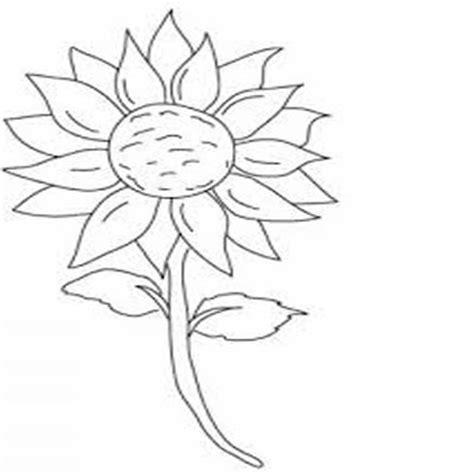 mewarnai gambar bunga matahari aneka gambar gambar