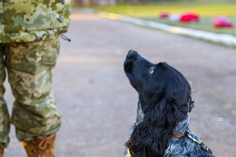 dogs for wounded warriors wagging support for wounded warriors service act