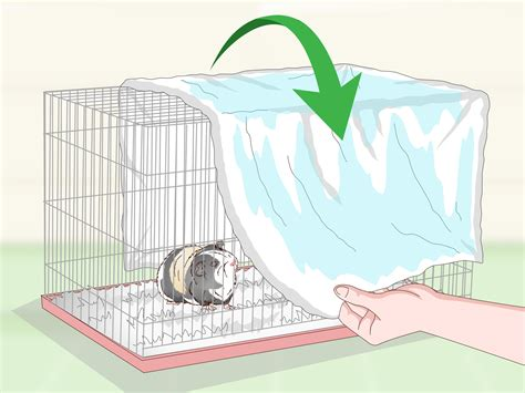 room temperature for guinea pigs how to keep your guinea pig cool in weather 13 steps
