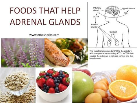 How To Detox Adrenal Glands by Foods That Help Adrenal Glands Adrenal Fatigue