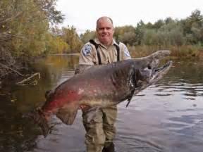 monster salmon found bb amp b braggin board