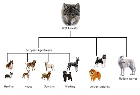 evolution of dogs evolution of dogs home