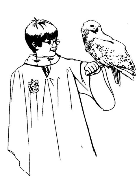 harry potter coloring book hedwig harry potter and owl hedwig coloring page netart