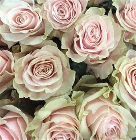 Vase Packaging Pink Mondial Standard Rose Roses Flowers By Category
