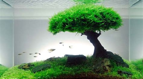 aquascape plants