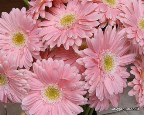 nomi di fiori in inglese i fiori di giugno luglio e agosto matrimonio estivo