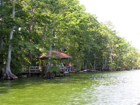 reelfoot lake boat rental reelfoot lake pontoon boat cruise tiptonville tn 2017