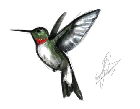 hummingbird tattoo for men tattoos of humming bird hummingbird designs for