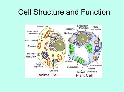 cell structure and function section 5 3 download the little book of alternative investments
