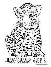 jaguar coloring pages baby jaguar coloring pages az coloring pages