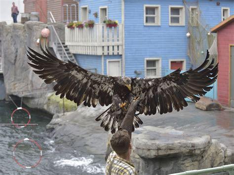 weisskopfseeadler erlebnis zoo hannover