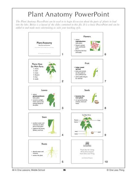 Garden Lesson Plans 17 Best Images About Plant Science On Plant