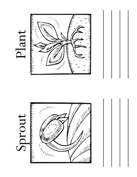 plants coloring pages preschool coloring pages of plant life cycle az coloring pages