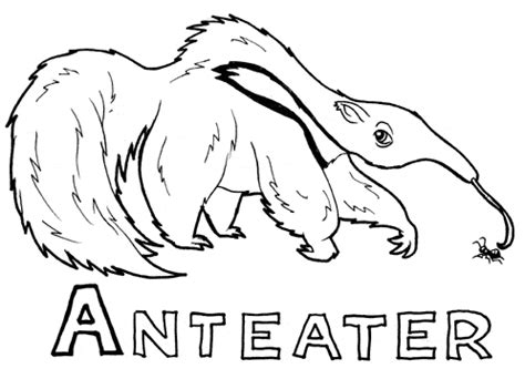 anteater coloring free animal coloring pages sheets anteater