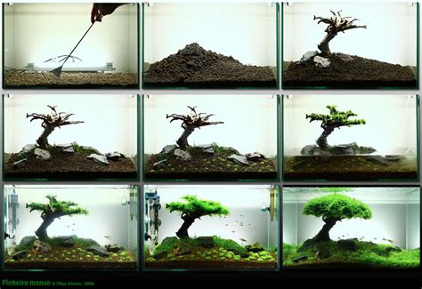 how to aquascape a nicely setup fish tank pics