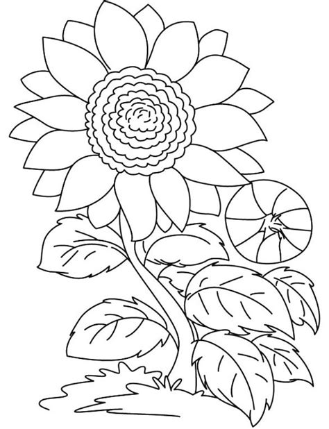 wallpaper bunga untuk garskin inilah 9 gambar bunga matahari hitam putih untuk diwarnai